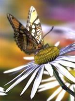 دارو تقویتی زنبور عسل ، فروش عسل - 1