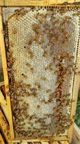 فروش عسل طبیعی با ارسال رایگان درب منزل در مشهد