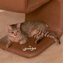 واگذارى گربه مهربون و خونگی