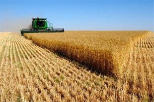 فروش زمین کشاورزی 575 هکتاری همدان - 1
