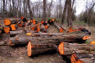 خرید و فروش عمده چوب ذغال
