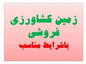 فروش زمین کشاورزی 200 هکتاری در قزوین - 1
