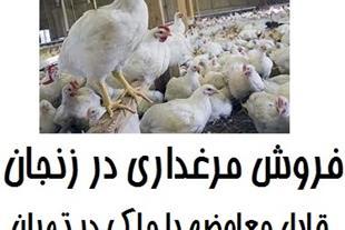 فروش مرغداری در زنجان