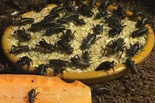 پرورش و فروش تخصصی حشرات