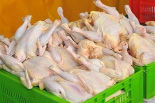 سبد دو کیلویی حمل مرغ گرم و مرغ منجمد - 2 کیلویی