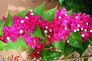 فروش انواع گل و گلدان