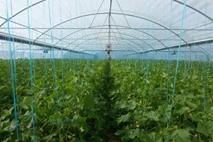 فروش گلخانه 5000 متر مربعی فعال و در حال کار