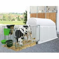 فروش گوساله شیر خوار و قطع شیر هلشتاین ، گاو