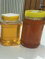 فروش عسل طبیعی کوهستان الوند همدان به درب منزل