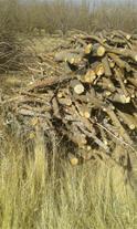 فروش عمده چوب سیب  چوب ذغال