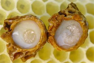 فروش ژل رویال 100% اصل ، فروش عسل طبیعی