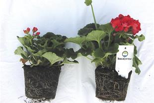 تراکوتم ، کود گل و گیاه