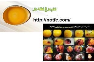 فروش تخم نطفه دار طیور - پرندگان زینتی
