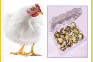 فروش تخم نطفه دار ، تخم نطفه دار بلدرچین