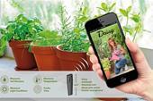 آبیاری گیاهان، چه در باغچه حیاط و چه در محیط داخل
