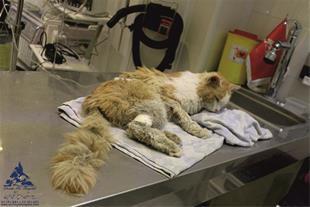 بخش چشم حیوانات خانگی بیمارستان دامپزشکی درین