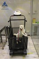 داروخانه دامپزشکی حیوانات خانگی بیمارستان درین