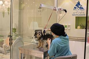 هتل پانسیون حیوانات خانگی درین