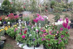 تولید و فروش گل آپارتمانی ، درختچه و نهال