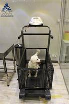 فیزیوتراپی و آبدرمانی حیوانات خانگی بیمارستان درین
