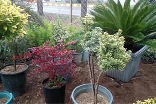 پخش درختچه ، نهال ، گل های زینتی و آپارتمانی