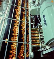 مزایده کارخانه خزرنوش - تولید کنسانتره آب پرتقال