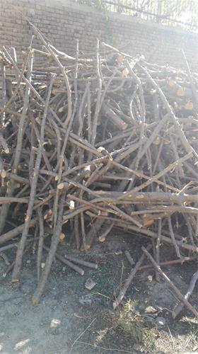 قیمت چوب ذغالی