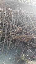 فروش عمده چوب - چوب ذغالی