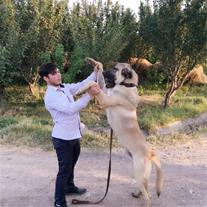 فروش سگ عراقی