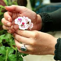 گل و گیاه امید