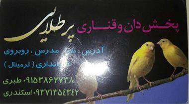 مغازه فروش قناری و ظروف و دان قناری - 1