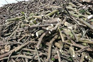 خرید و فروش چوب بلوط و سیب