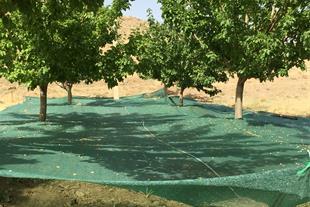 جمع آوری توت و محصولات زراعی - 1