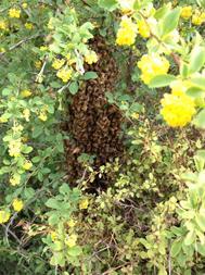 فروش عسل طبیعی با ارسال رایگان - 1