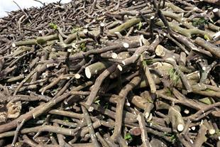 فروش عمده چوب بلوط