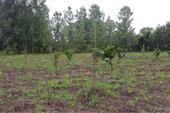 فروش زمین شمال جنگلی منطقه زیبا - 400 متر