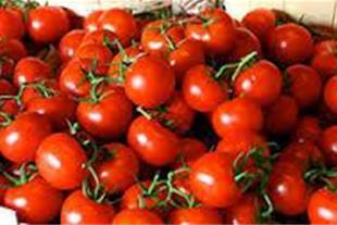 فروش تره بار گوجه فرنگی و سیب زمینی