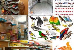 فروشگاه پرنده و لوازم پرنده ققنوس