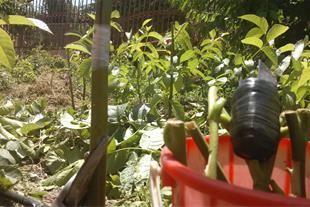 باغبانی وباغداری