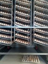 فروش تخم کبک نطفه دار