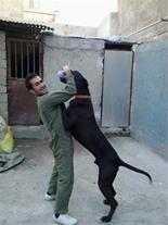 مربی سگ ، آموزش سگ