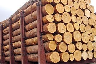 فروش انواع چوب روسی