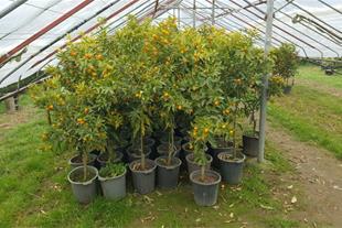 حراج و فروش عمده انواع گل فضای باز و حیاط سازی