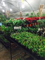 فر.وش گل و گیاه زینتی ، آپارتمانی و باغچه ای