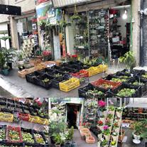 فروش گل وگیاه زینتی آپارتمانی و باغچه ای