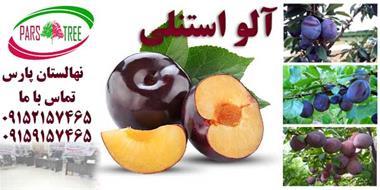 نهال آلو-نهالستان پارس