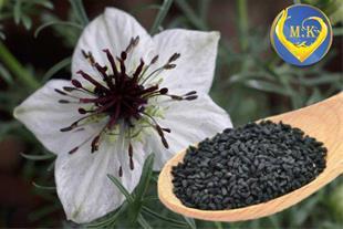 فروش سیاه دانه هندی و سوری