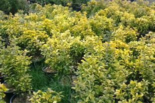 فروش گیاهان زینتی با قیمت مناسب