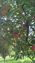 باغ ویلا 6000متری در قره چمن