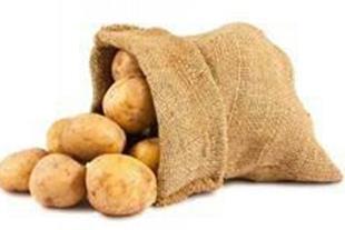 فروش انواع سیب زمینی بذری